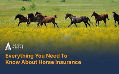 Everything You Need To Know About Horse Insurance