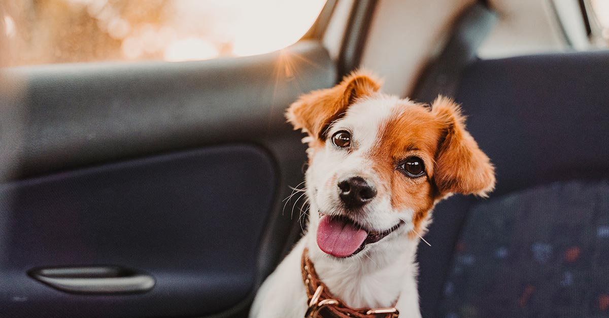 where-to-get-dog-liability-insurance-1